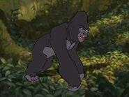 Rileys Adventures Western Lowland Gorilla