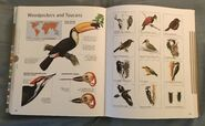 Visual Dictionary of Animals (90)