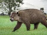 Giant Raccoon