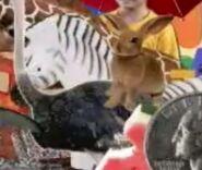 Cookoo Concertos Zebra