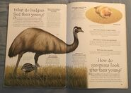 Desert Animals (Over 100 Questions and Answers to Things You Want to Know) (14)