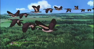 Kiki's Delivery Service Geese