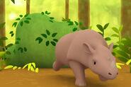 LTWR Sumatran Rhino