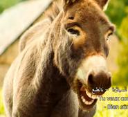 Little Miss Dolittle Donkey