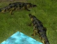 Nile-crocodile-wildlife-park-2