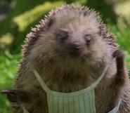 Peter Rabbit Hedgehog