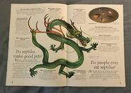 Reptiles (Over 100 Questions and Answers to Things You Want to Know) (14)