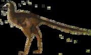 Dwarf Troodont