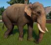 Elephant, Indian (Planet Zoo)