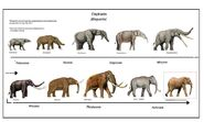 Elephants Hippos Rhinos Whales Dolphins Porpoises Hyraxes Manatees Dugongs Mammoths Mastodons and Aardvarks