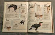 Macmillan Animal Encyclopedia for Children (16)