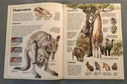 Usborne World Wildlife- Grassland Wildlife (2)