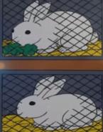 Batw 001 rabbits