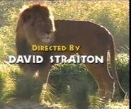 DAKTFA Lion