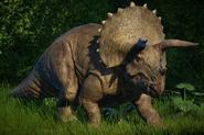 JWE Triceratops