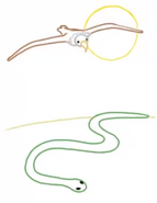 Jumpstart firstgrade animals on the move the snake and the eagle