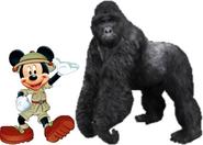 Mickey meets eastern mountain gorilla