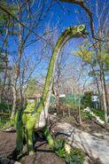 Saint Louis Zoo Brachiosaurus