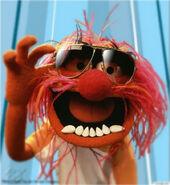 Animal muppet 13