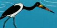 BATW Saddle-Billed Stork