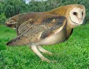Barn owl switch zoo