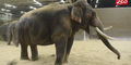 Columbus Zoo Elephants