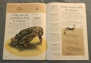 Desert Animals (Over 100 Questions and Answers to Things You Want to Know) (12)