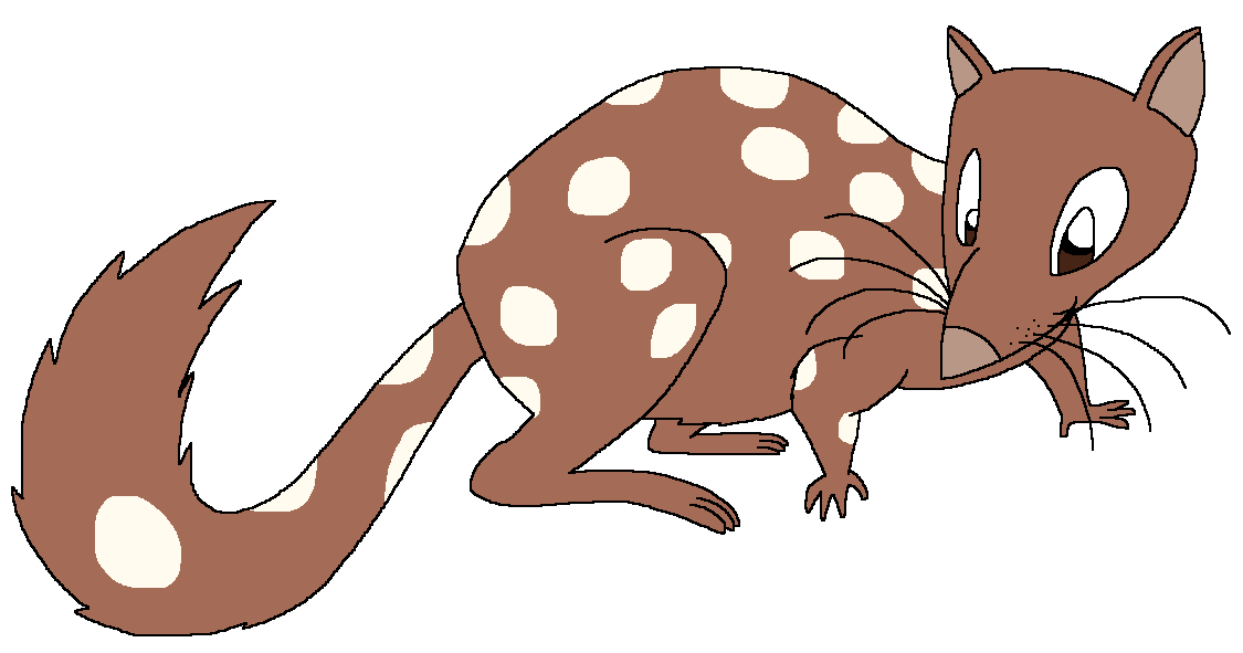 Dottie the Quoll