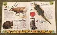 Endangered Animals Dictionary (1)