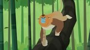 Golden Snub-nosed Monkey (Wild Kratts)