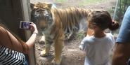 Indianapolis Zoo Tiger