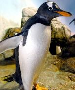 Penguin, Gentoo (V2)