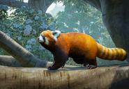 Red-panda-planet-zoo