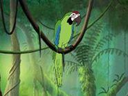 Rileys Adventures Great Green Macaw