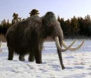 WWB Mammoth