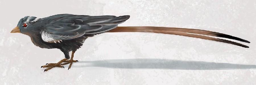 Confuciusornis
