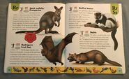 Endangered Animals Dictionary (20)