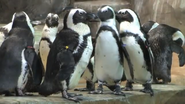 Fort Worth Zoo Penguins