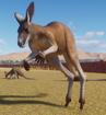 Kangaroo, Red (Planet Zoo)
