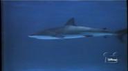 Mysteries of the Deep Shark
