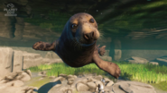 Planet Zoo Seal
