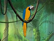 Rileys Adventures Blue and Gold Macaw