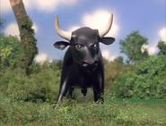 TTTE Bull