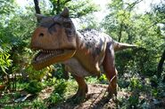 Dallas Zoo Carnotaurus