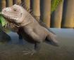 Iguana, Lesser Antillean (Planet Zoo)