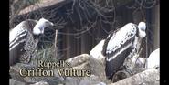 Louisville Zoo Vultures