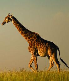 SouthAfrican.jpg