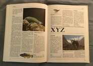 The Kingfisher Illustrated Encyclopedia of Animals (178)
