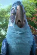 Eduardo the Macaw