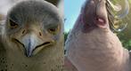 Falcon and Nigel
